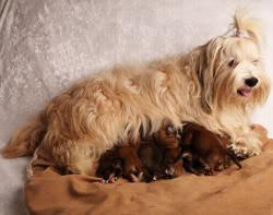 Kennel Miki Nanoqs hundehvalpe