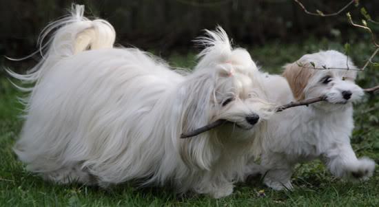 Kennel Miki Nanoqs hunde